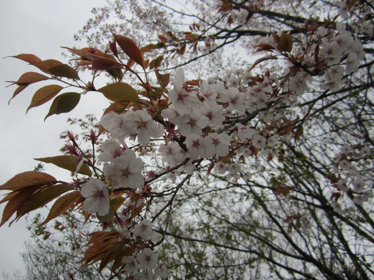あだ花: 日本めぐり―老拙の記録